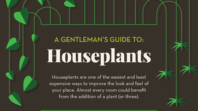 A Gentleman's Guide to Houseplants (Infographic)