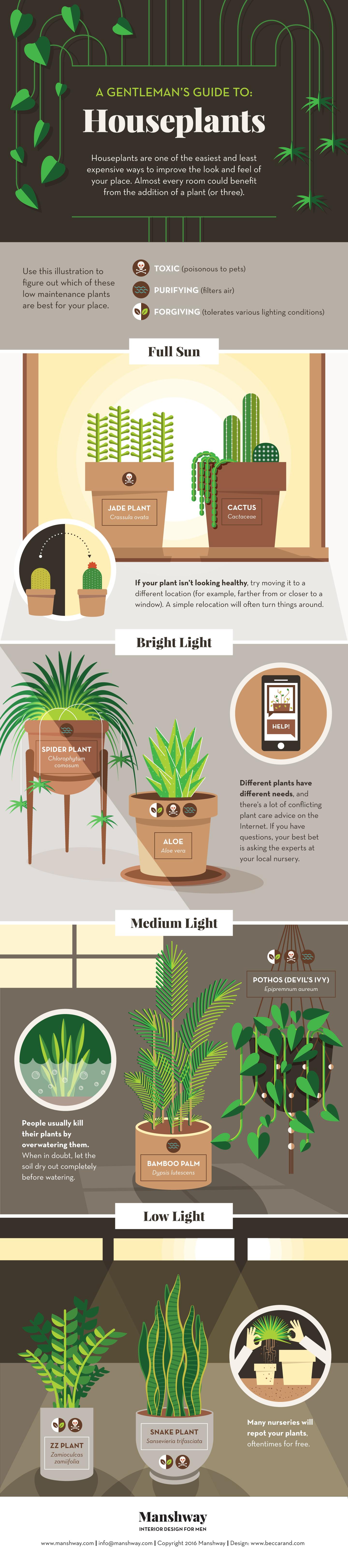 Houseplants Guide for Men