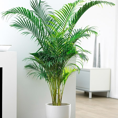 A Complete List of Air Purifying House Plants on names of vegetables, names of flowers, names of books, names of indoor begonias, low light houseplants, names of shrubs, best houseplants, names of indoor cactus, names of indoor palms, tropical houseplants, most common houseplants, names of vines, names of plants, names of indoor trees, 10 easy houseplants,