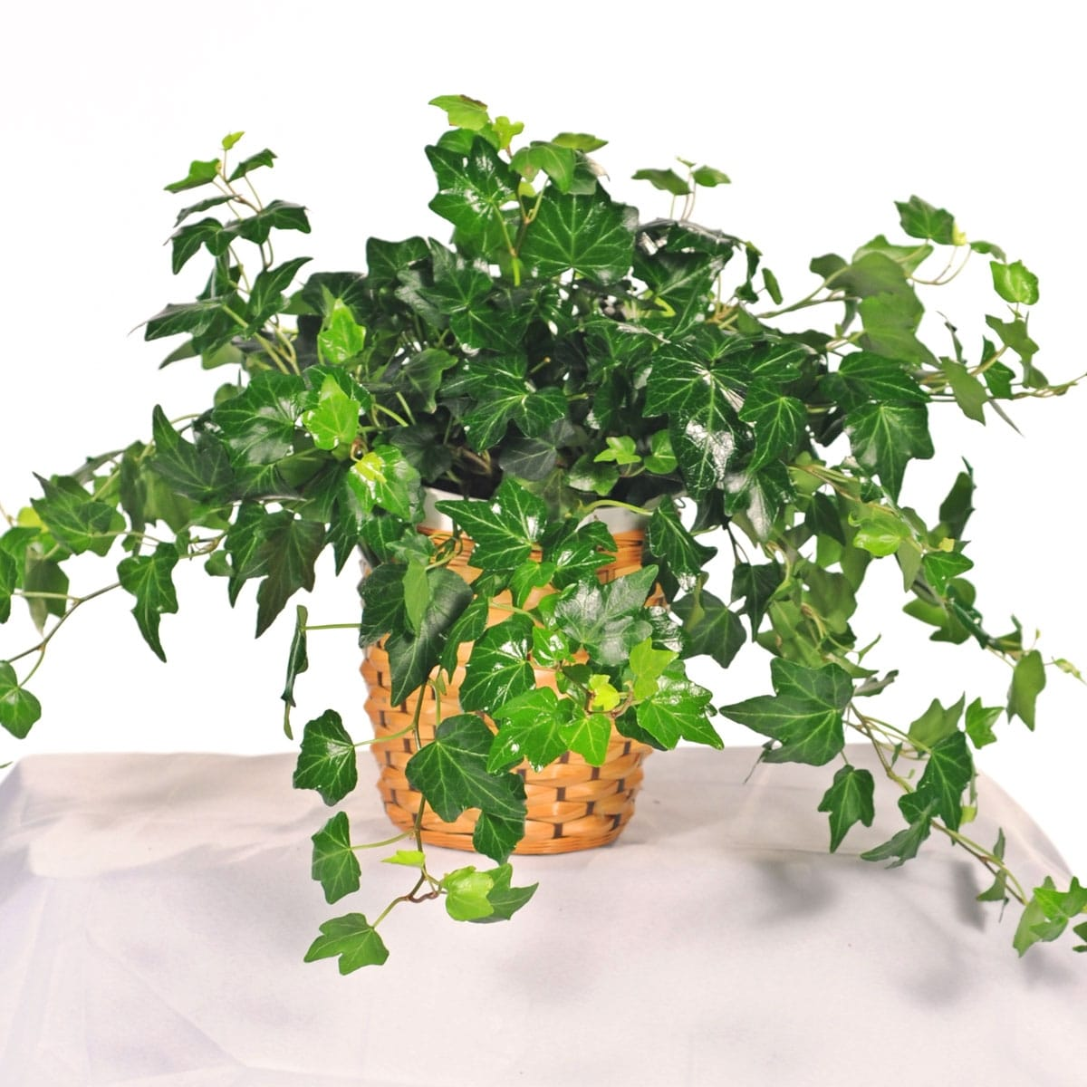 A Complete List of Air Purifying House Plants - Manored