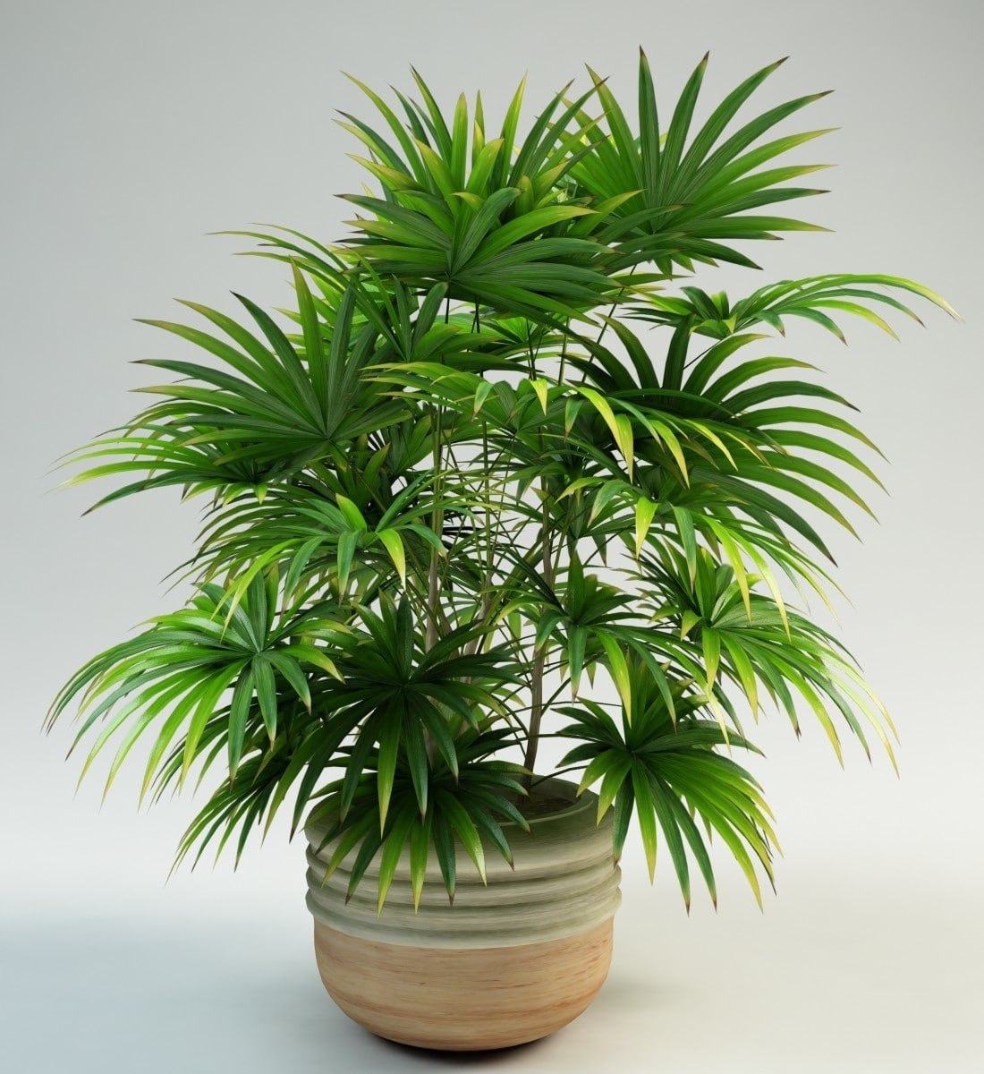 A Complete List of Air Purifying House Plants on spices names, grass names, berries names, wildflowers names, veggies names, plants names, pets names, design names, garden names, cacti names, photography names, nuts names, furniture names, weather names, insects names, ornamental grasses names, herbs names, leaves names, lawn care names, pottery names,