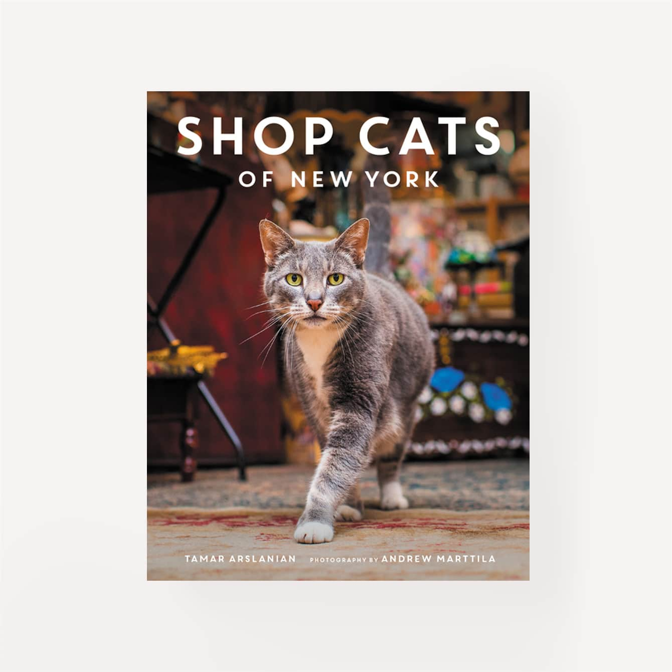 Shop Cats of NY